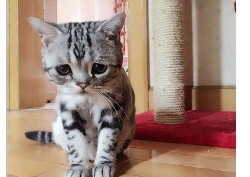 可怜猫图片太委屈触发网络如此走红委屈无数人脸大全哭表情包表情图片