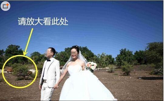 四川小夫妻花2万多巴厘岛拍婚纱 竟拍出了乡村味 婚宴