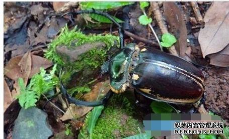 今日头条新闻国家二级保护动物阳彩臂金在四川雅安消