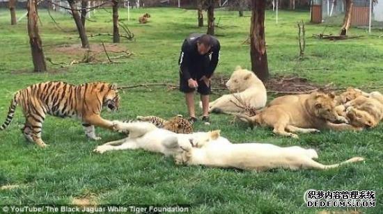 今日头条新闻墨西哥动物园一花豹欲偷袭饲养员