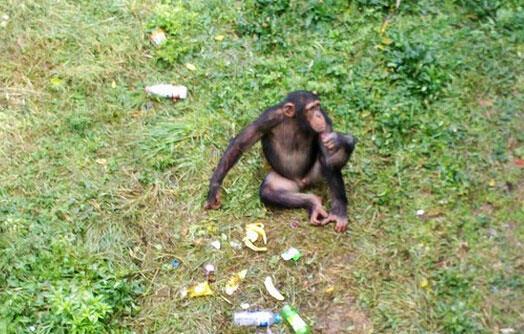 保护动物的理念,园方也应加强文明游览和动物科普的