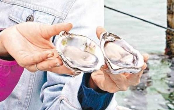 日本 福岛/从网上的图片看,这个巨型生蚝比成年男子的手掌还要大一圈,...