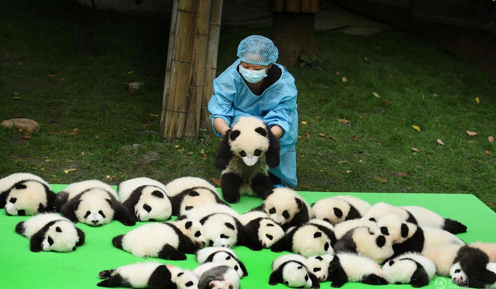 熊猫头像不要可爱